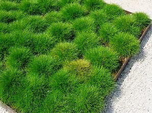 Георешетка отлично укрепляет газон
