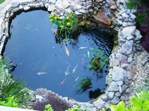 Правильно оборудованный водоем можно использовать для разведения рыбы