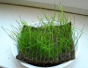 С биоматом любой склон озеленится за считанные дни!