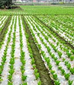 Применение геотекстиля при выращивании овощных культур
